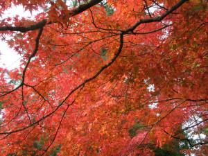 【画像】岡山後楽園の紅葉