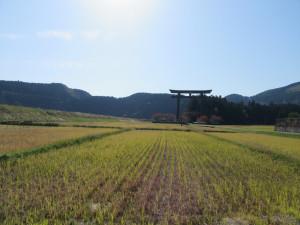【画像】田んぼのど真ん中に建つ大斎原の大鳥居