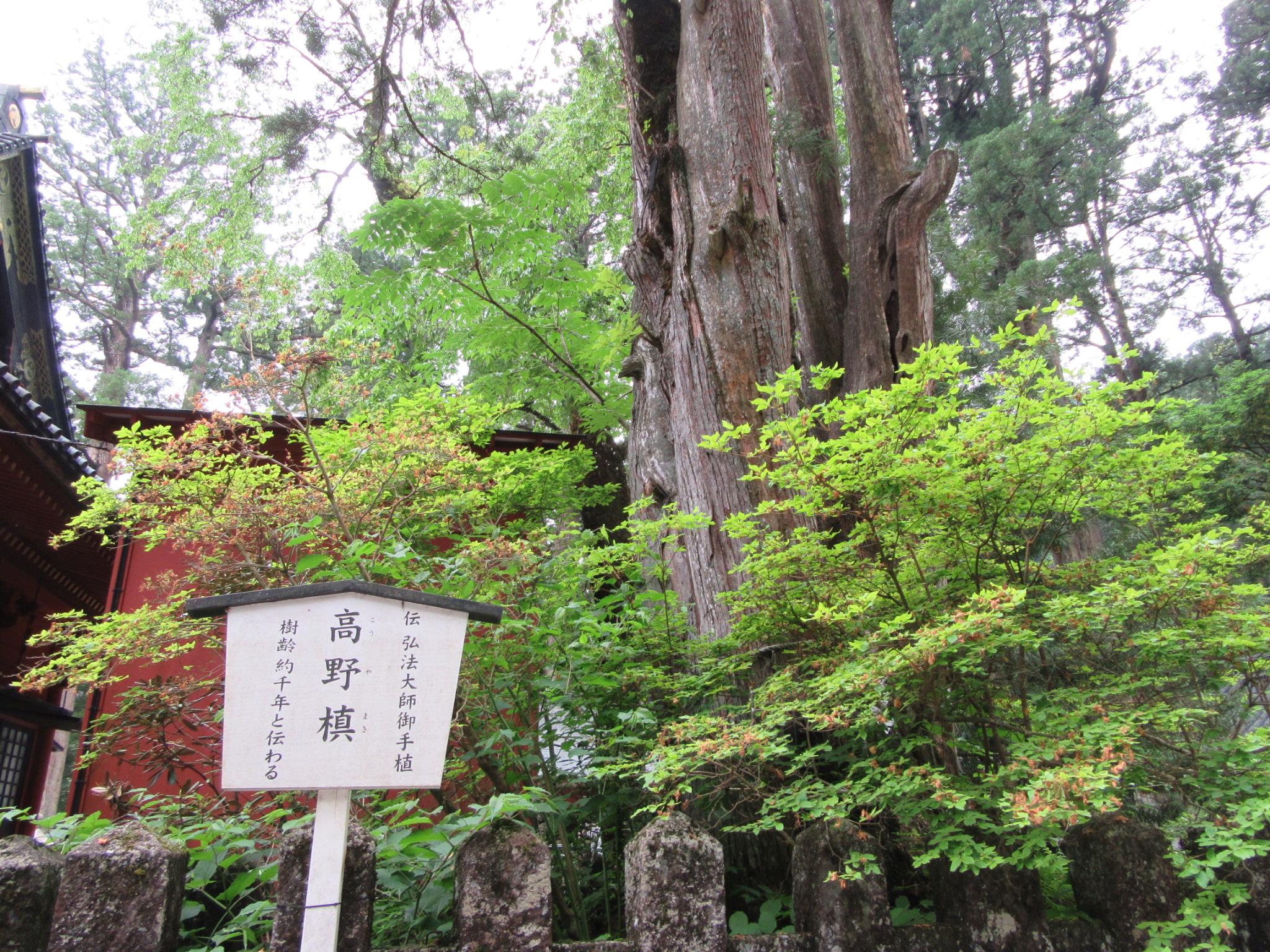 【画像】二荒山神社 本社 高野槙