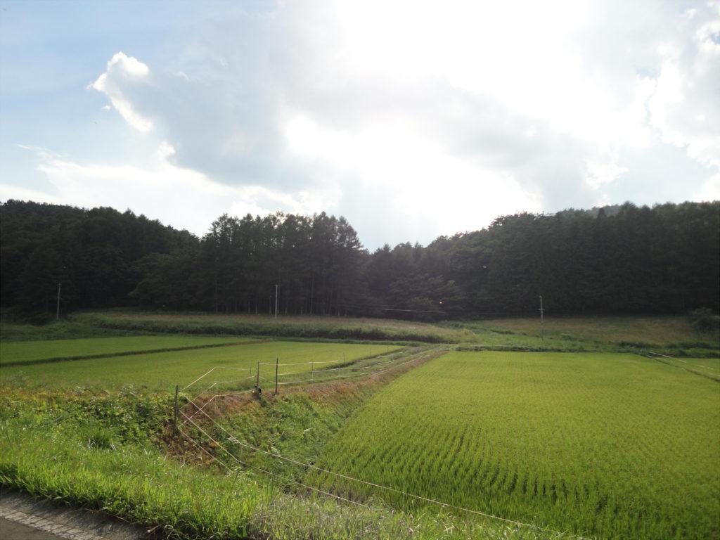 【画像】田園風景