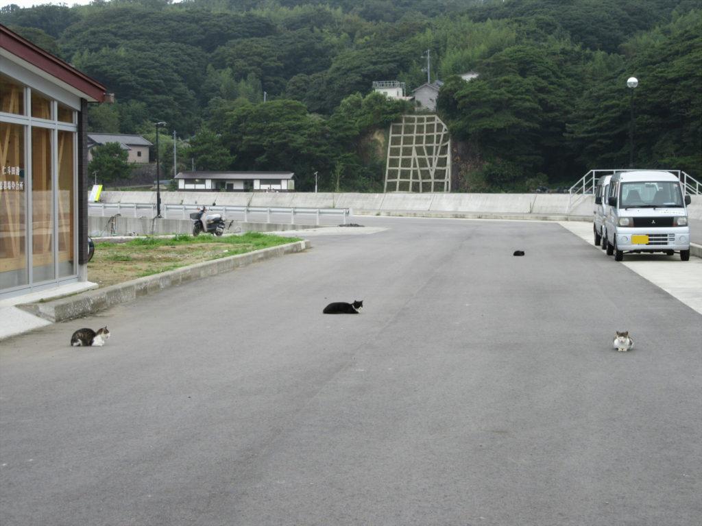 【画像】田代島12