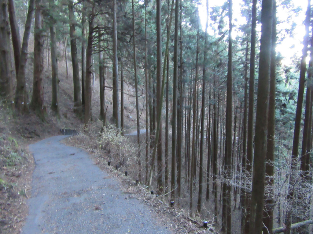 ケーブル下への山道