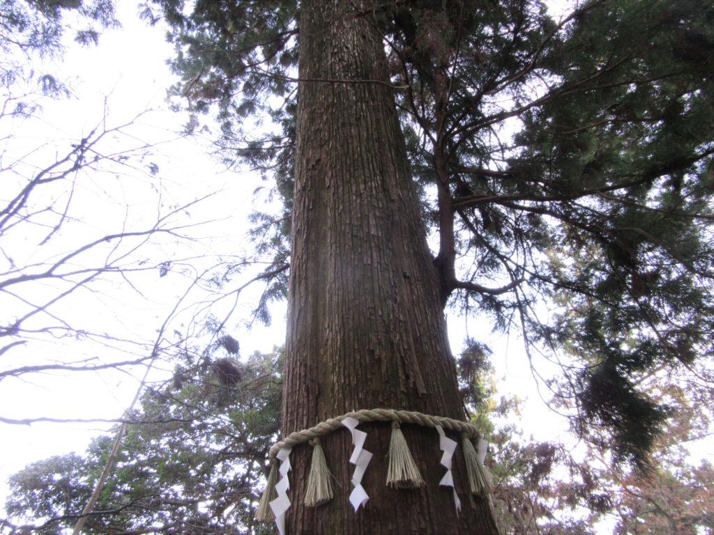 高尾山 杉並木